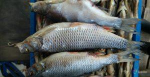 Можно Ли Есть Сушеную Рыбу При Беременности