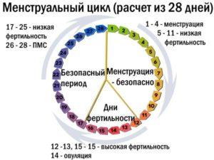 При Цикле 24 Дня Когда Наступает Овуляция