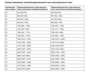 Сколько Весит Ребенок На 25 Неделе Беременности