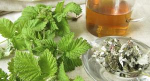 Можно ли при беременности чай с листьями смородины
