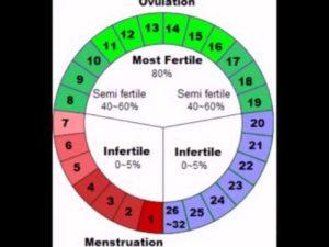 Дни фертильности что это такое