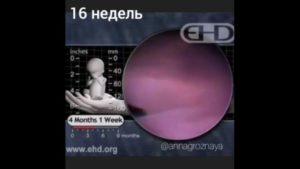 16 Неделя беременности от зачатия ощущения