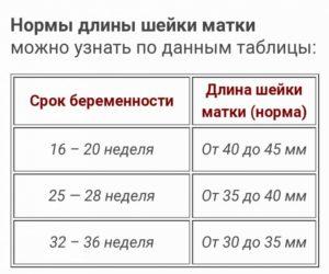 Шейка матки на 35 неделе беременности норма