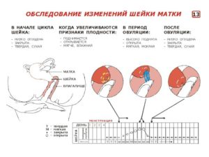 Болит шейка матки при беременности на ранних сроках