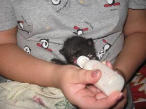 Что делать если котенок не пьет молоко у матери
