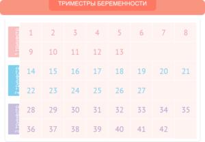 Со Скольки Недель Начинается 2 Триместр Беременности