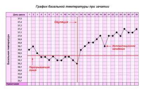 Сколько дней держится температура при беременности на ранних сроках