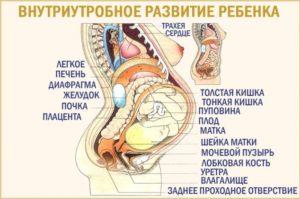 34 неделя болит лобковая кость