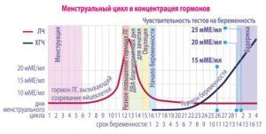 Гормоны во второй фазе цикла