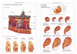Признаки замершей беременности на 18 неделе беременности