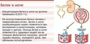 Повышен белок в моче при беременности форум
