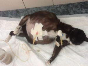 У беременной кошки выделения перед родами