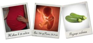 26 неделя беременности двойней развитие плода вес и рост