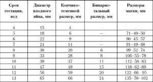 Размеры матки при беременности по неделям таблица