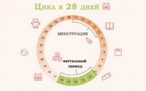 Можно Ли Забеременеть На 22 День Цикла