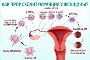 Может болеть низ живота при оплодотворении яйцеклетки