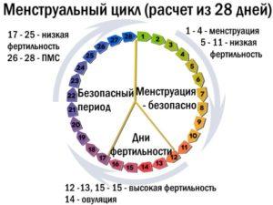 Если Менструационный Цикл 25 Дней Когда Овуляция