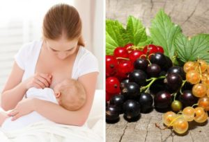 Можно ли кормящей маме компот из черной смородины