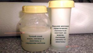 Сдать грудное молоко на жирность в москве