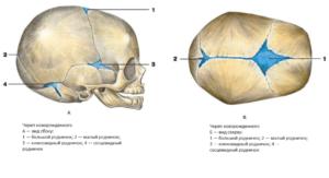 Кости черепа у новорожденных мягкие