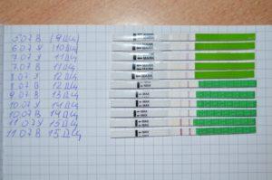 Сколько дней тест на овуляцию показывает положительный результат