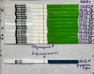 Овуляция на 15 день цикла когда делать тест на беременность