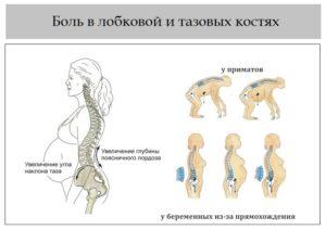 Болит лобковая кость 38 недель