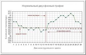 Беременность на 11 день цикла при 28 дневном цикле