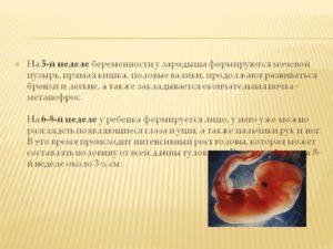 Ощущения на 5 неделе беременности форум