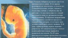 Пятая эмбриональная неделя беременности что происходит