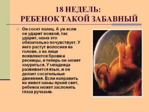 Беременность 17 18 недель развитие плода