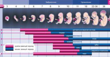 Эмбрион отстает в развитии на неделю на раннем сроке беременности