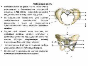 Болит лобковая кость 36 недель