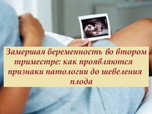 Первые Признаки Замершей Беременности Во Втором Триместре