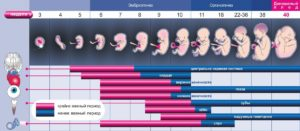 Беременность по неделям развитие плода и ощущения женщины после 35 лет