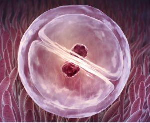 Как помочь эмбриону закрепиться в матке народными средствами