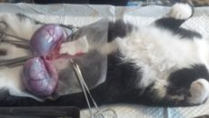 Как расположены котята в животе у кошки