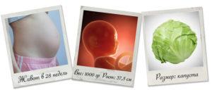 Плод на 27 28 неделе беременности