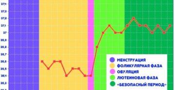 36 9 базальная температура после овуляции