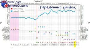 Базальная Температура При Беременности На Ранних 37