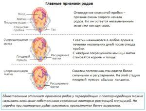 Признаки родов при второй беременности 38 недель